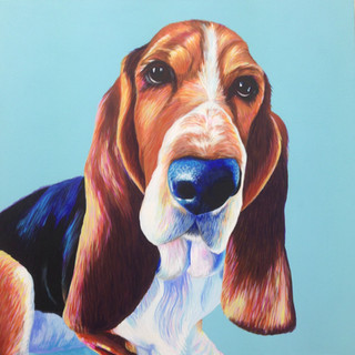 Bassett Hound on Turquoise