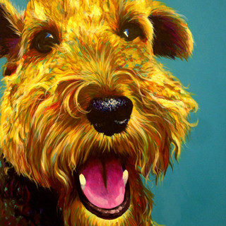 Welsh Terrier on Turquoise