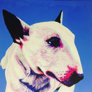 Bull Terrier on Blue