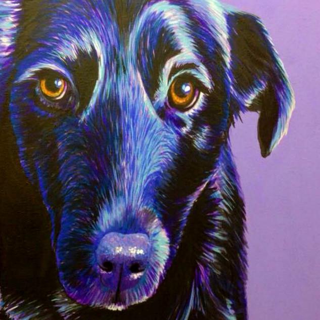 Black Labrador on Lilac