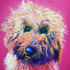 Labradoodle on Pink