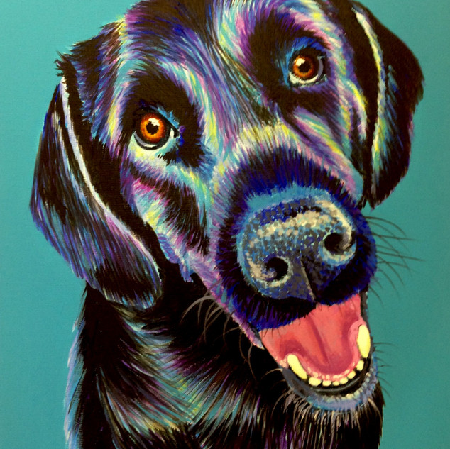 Black Labrador on Turquoise