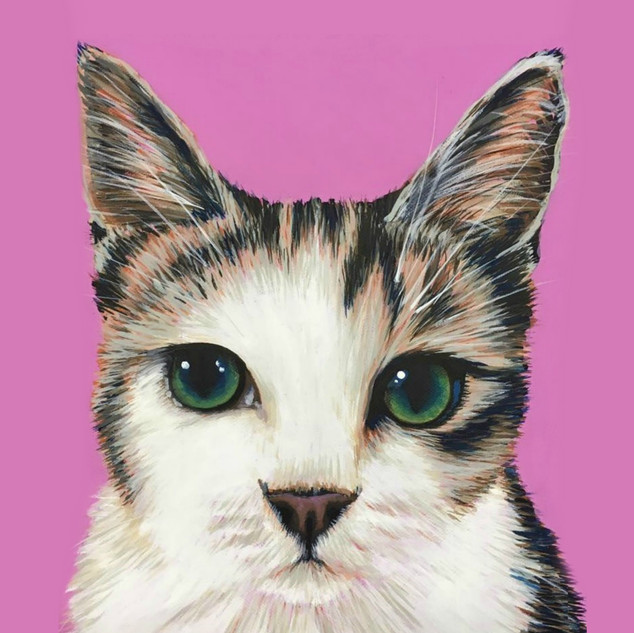 Tabby & White on Pink