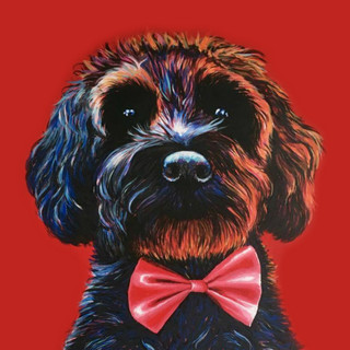 Cockerpoo on Red