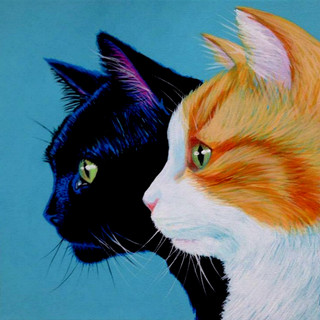 Cats on Turquoise