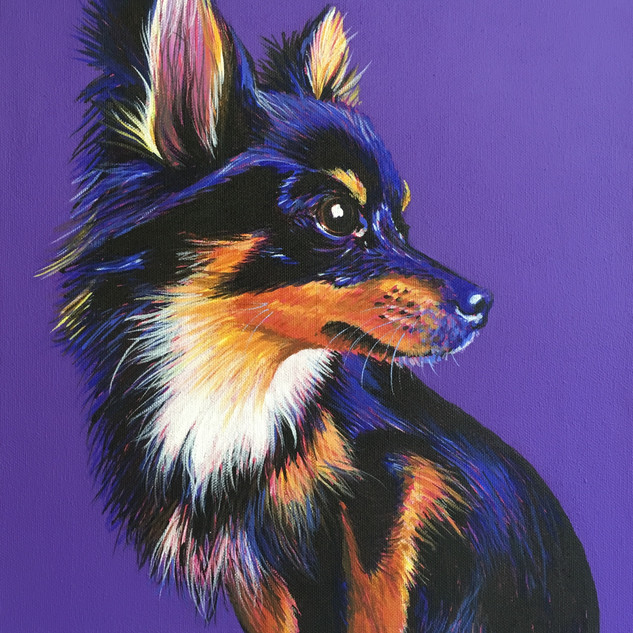 Chihuahua on Purple
