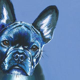 French Bulldog on Blue