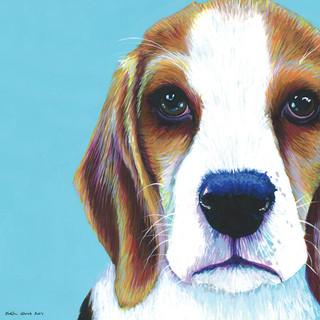 Beagle on Turquoise
