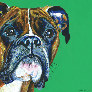 Boxer on Emerald