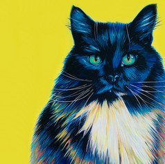 Black cat on yellow.jpg