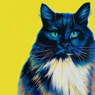 Black cat on yellow