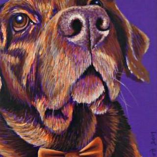 Chocolate Labrador on Purple