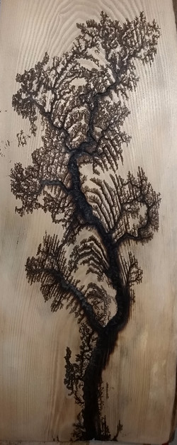 Willow on Ash