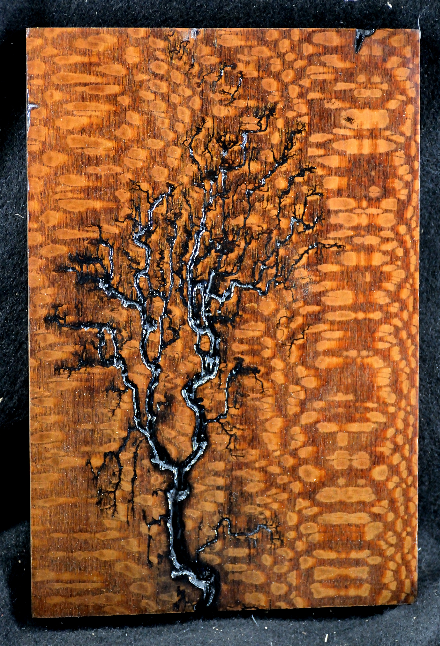 Leopardwood fractals