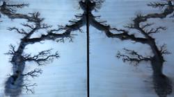 Poplar Mirror Pattern