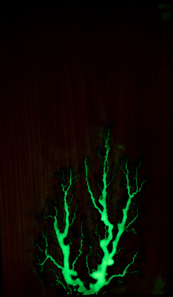 Glow in the Dark on Poplar