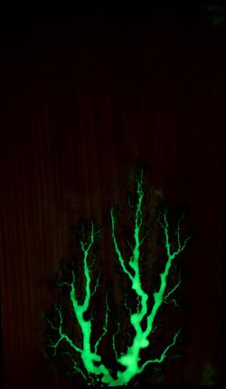 Glow in the Dark on Poplar