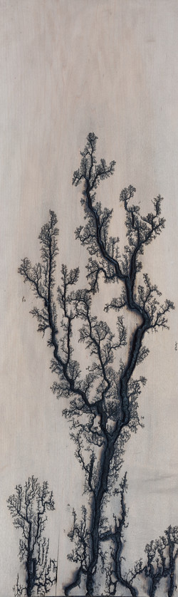 Maple Tree Pattern