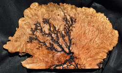 Small Maple Burl