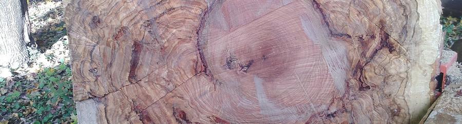 my giant oak burl