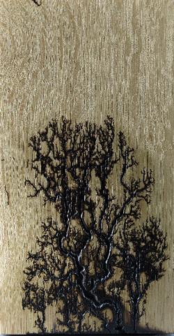 Oak Tendrils