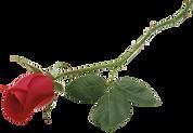 rose_PNG66789.png
