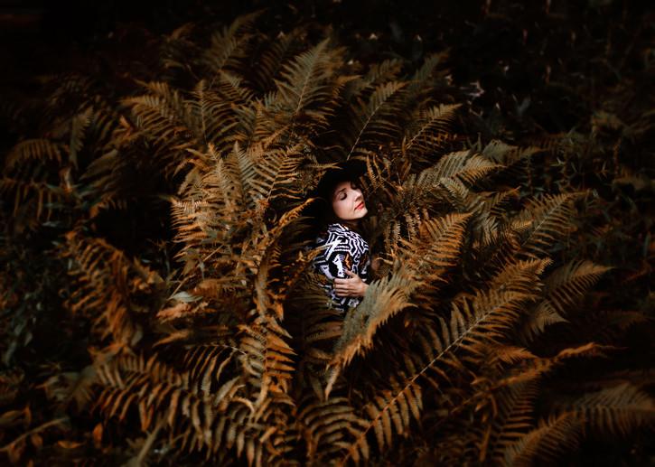 The Ferns
