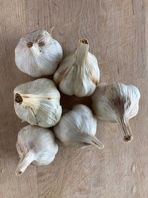 Cured Softneck Garlic