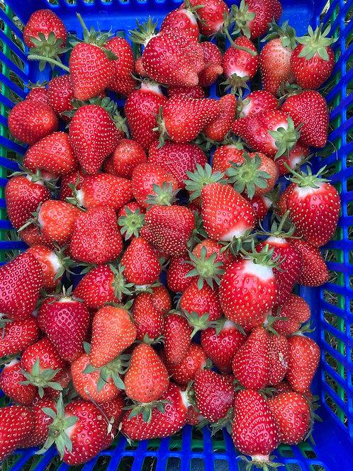 Strawberries - quart
