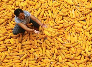 Día de la Alimentación y de la Erradicación de la Pobreza