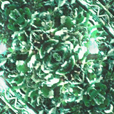 Green Leaves 1.jpg