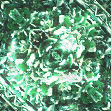 Green Leaves 3.jpg