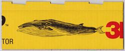 ナガスクジラ-3