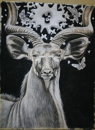 Halo Series:kudu