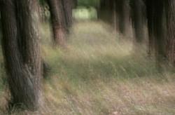Forest Impression.