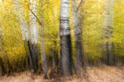 Autumn Forest Fantacy.