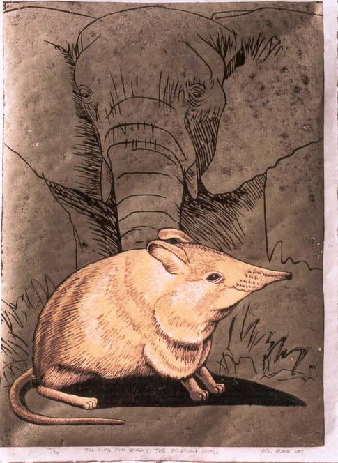 The Little Five Series:Elephant Shrew