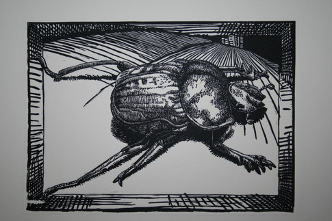 Its all abour Perspective:Dung Beetle 2