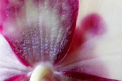 Petal Beauty.