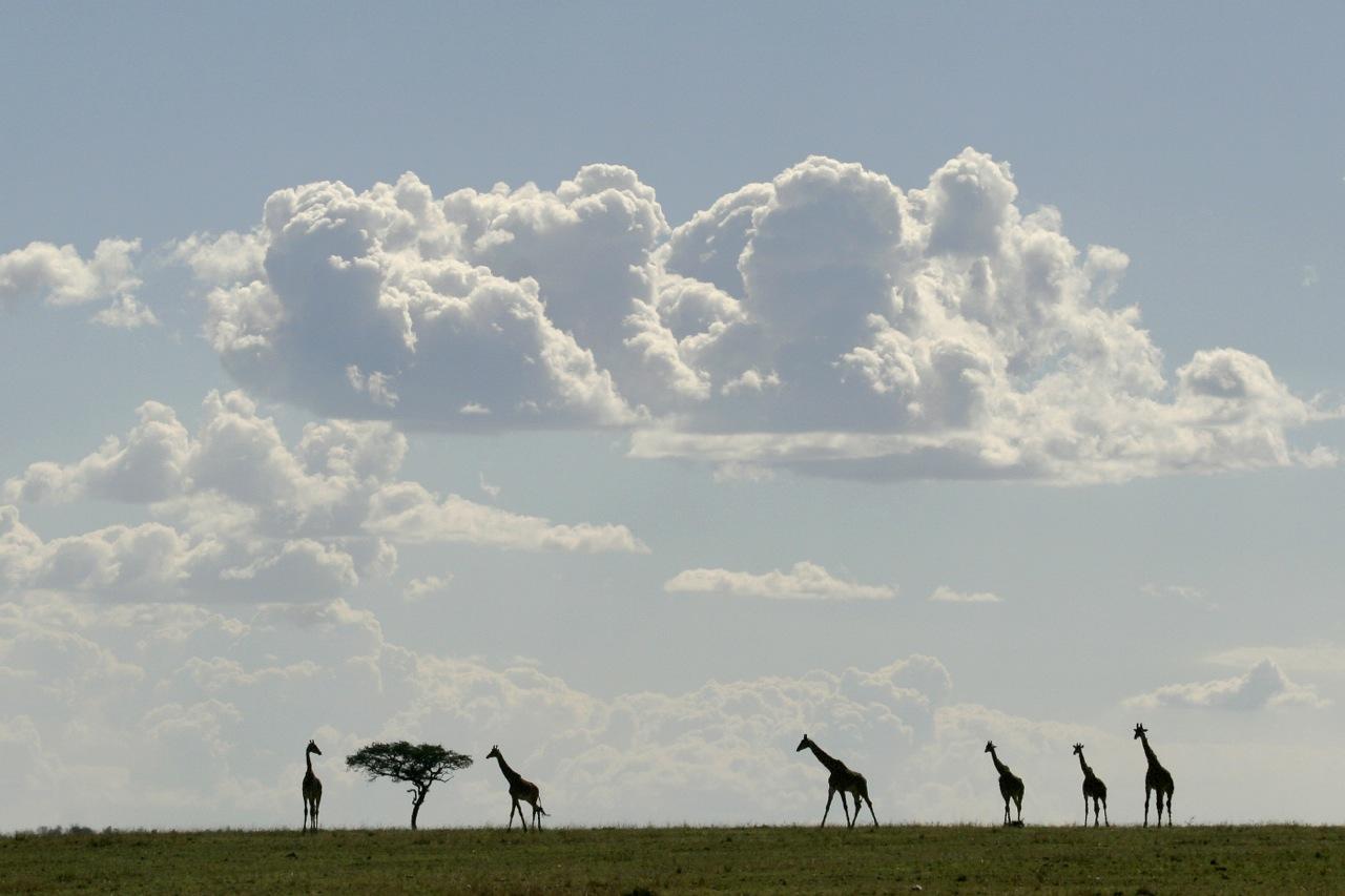 Giraffe Skyscape.-2.
