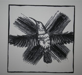 Noughts and Crosses Series:Sunbird