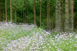 Forest Flower Fantasy.