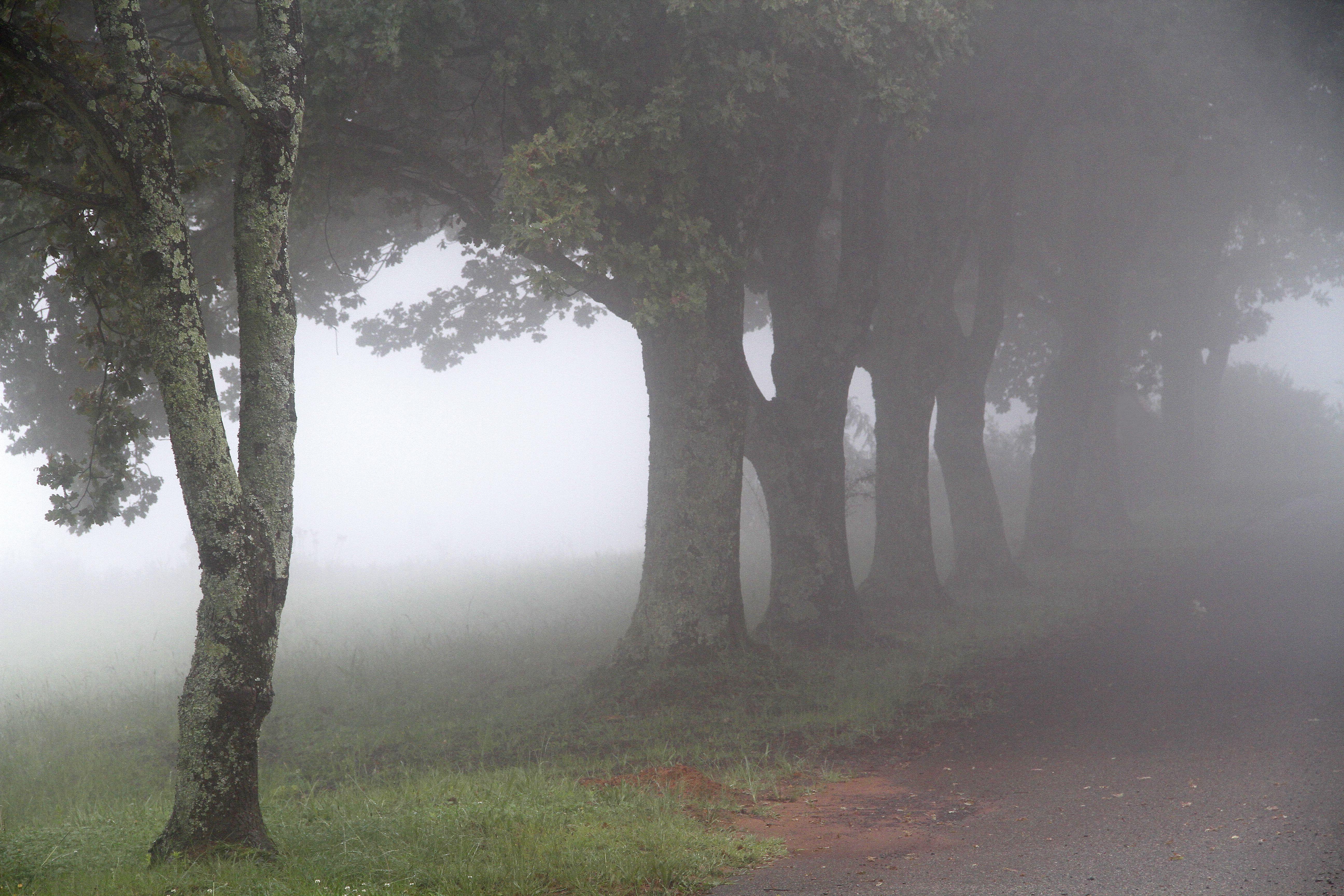 Misty Trees, Dullstroom.