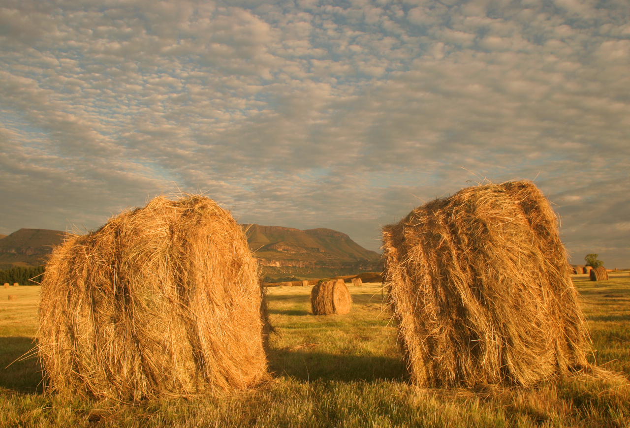 Sunset Bales.
