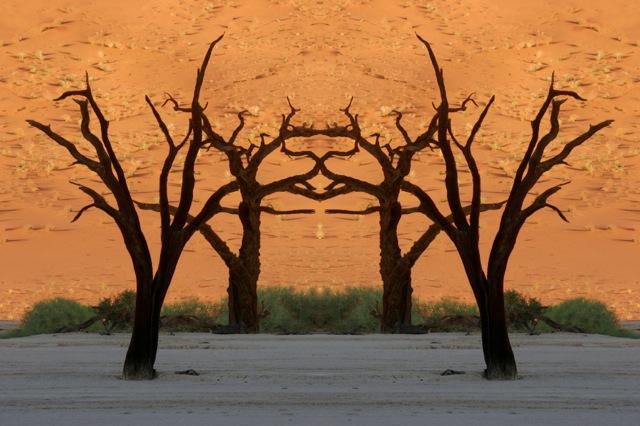 Dead Vlei Symmetry.