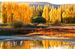 Autumn Eastern, Eastern Free State.
