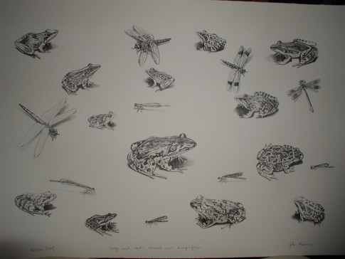 Frogs and toads, damsel and dragonflies