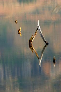 Reflective Hues.