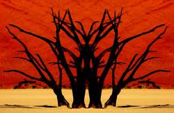 Surreal Deadvlei Trees 2.