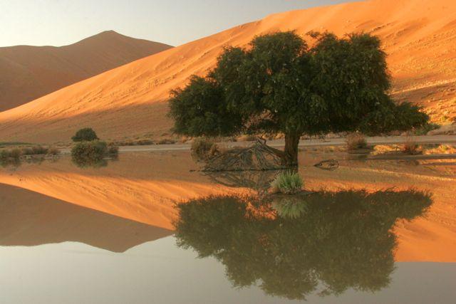 Dune Reflection.